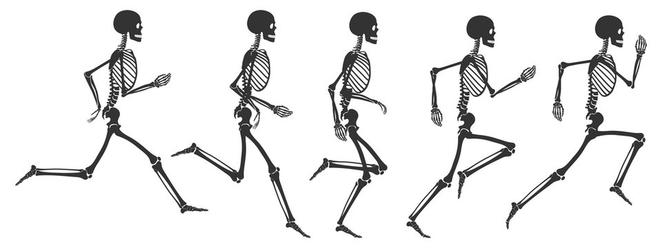Five phases of running human skeleton. Black skeleton silhouettes isolated on white background. Vector illustration in flat style