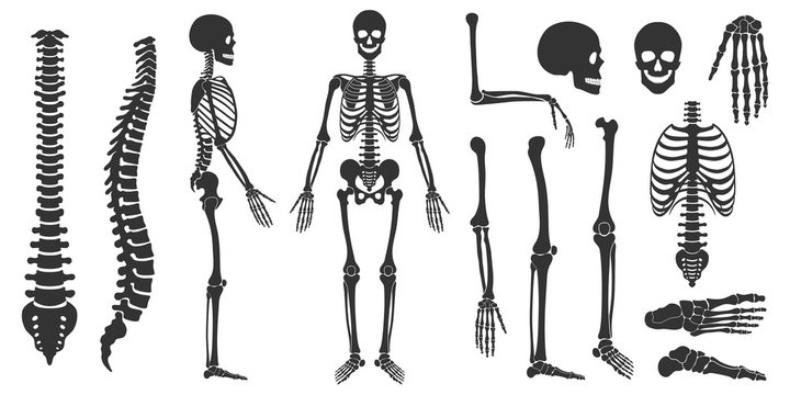 Set of black silhouettes of skeletal human bones isolated on white background. Vector illustration in flat style