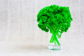 Bunch of fresh green parsley in glass with water on jute background. Healthy vegetarian and vegan food ingredient. Latin name Petroselinum from family Apiaceae.