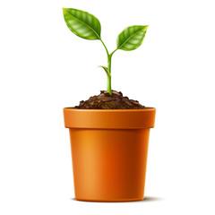 Obraz Vector 3d green seedling grows in soil ceramic pot - fototapety do salonu
