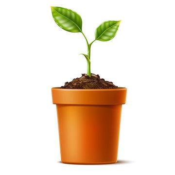 Vector 3d green seedling grows in soil ceramic pot