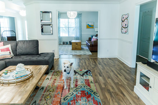 Bright living room in a house with neutral furniture , hardwood floors and a rug and a dog