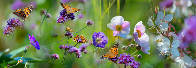 The panoramic view the garden with flowers and butterflies
