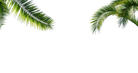 Papiers peints Palmier freigestellte palmenblätter auf weiss