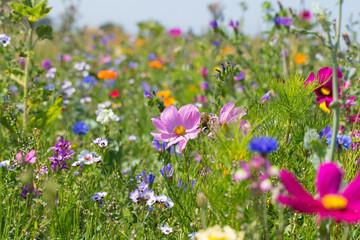 Bunte blühende Sommerwiese mit Wildblumen für Bienen und Insekten Fotoväggar