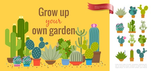 Wall Mural - Colorful Cactuses Home Garden Concept