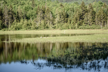 View of a Lake in Rangeley Maine in the Center of the Rangeley Lakes Region