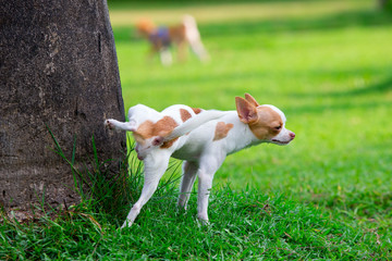Cute small dog peeing on a tree in an park. Wall mural
