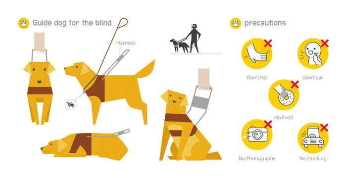 Blind Dog Guide Information Icon Design. Golden Retriever wearing a blind guide dog uniform. flat design style minimal vector illustration.