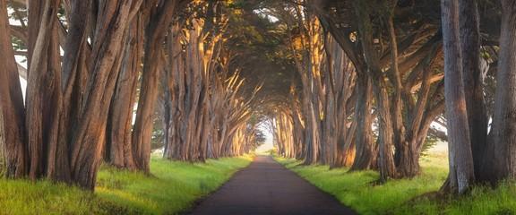 Fototapeta Stunning Cypress Tree Tunnel at Point Reyes National Seashore, California, United States. Fairytale trees in the beautiful day near San Francisco, USA