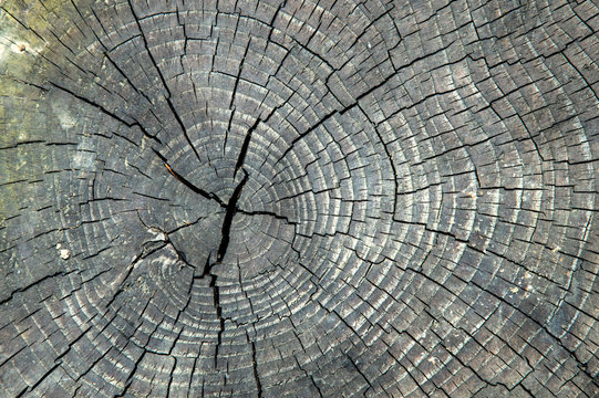 Close up, macro. The texture of the old, cracked wood. Slice, visible circles.