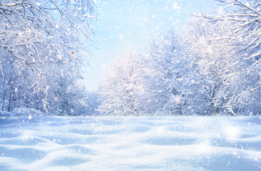 Winter Christmas idyllic landscape. White trees in forest covered with snow, snowdrifts and snowfall against blue sky in sunny day on nature outdoors, blue tones.