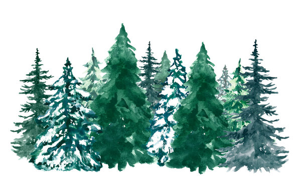 Watercolor pine trees background. Banner with hand painted pine forest, isolated. Snow winter wonderland illustration for Christmas.