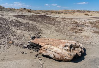 Piece of Petrified Wood in Southwest Desert Landscape