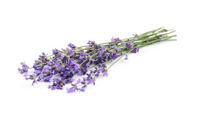 Papiers peints Lavande Beautiful tender lavender flowers on white background
