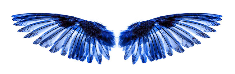 Angel wings on white background