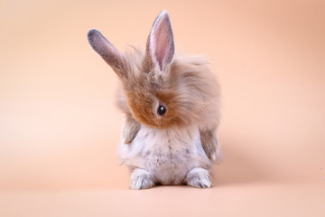 Cute little rabbit Standing on an orange background Wall mural