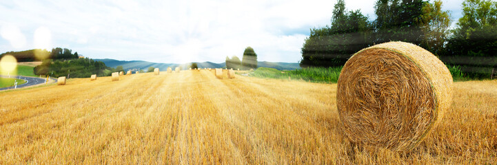 Harvested grain field and straw bales