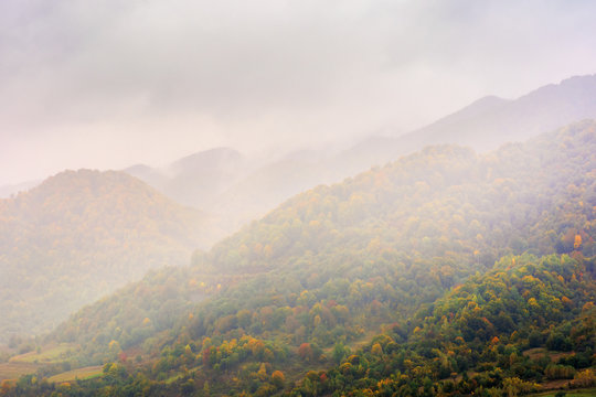 autumn rainy day in mountains. beautiful nature background. trees on the hill in fall foliage. overcast weather