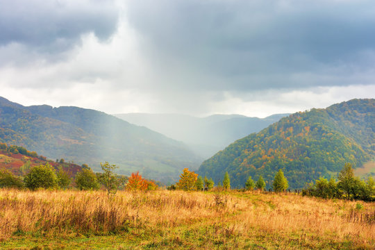 autumn rainy day in mountains. beautiful nature background. trees on the hill in fall foliage. overcast weather. meadow in sunlight