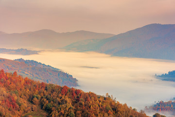 fog in the valley at sunrise. beautiful autumn scenery in mountains. forest on the hill in fall foliage.