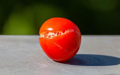 Pirate Tomato