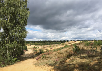 Sandy walking trail in heath landscape, dark clouds on a sunny day, Limburg border between Belgium and The  Netherlands, Europe