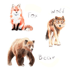 watercolor drawings of forest animals: fox, wolf, bear
