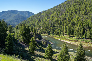 View of the Salmon River in the Salmon-Challis National Forest of Idaho during a sunny summer day Fotomurales