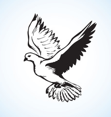 Vector illustration Flying dove