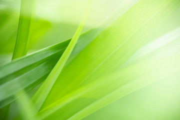 Close up of nature view green leaf on blurred greenery background under sunlight with bokeh and...