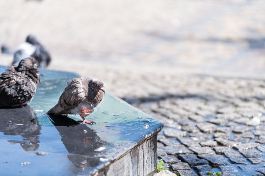 Warsaw, Poland historic sunny summer day morning street water fountain with many pigeon birds and stream