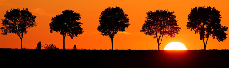 Trees are seen in silhouette during sunset in Baralle near Cambrai