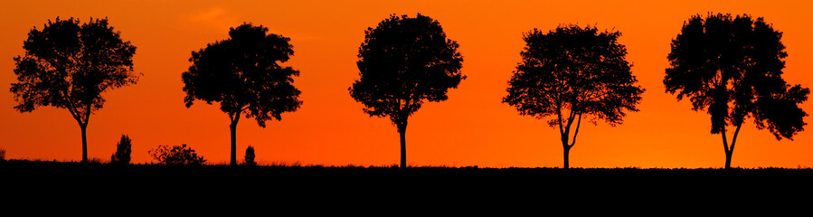 Trees are seen in silhouette against aÊgolden sunset sky in Baralle near Cambrai