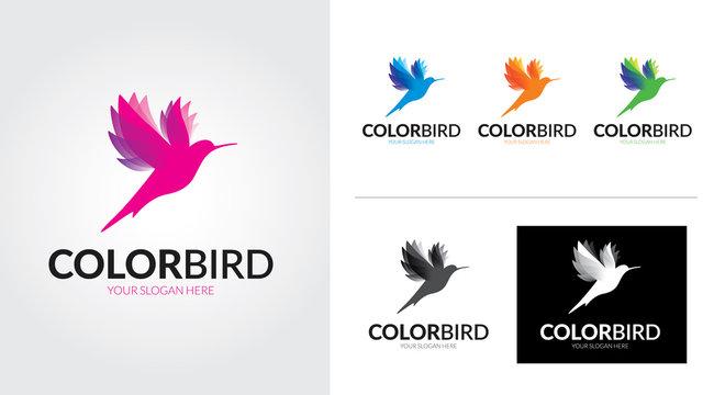 Color bird creative and minimalist logo template Set