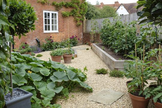 Vegetable garden kitchen garden
