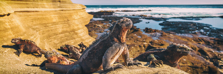 Galapagos Iguana lying in the sun on rock. Marine iguana is an endemic species in Galapagos Islands Animals, wildlife and nature of Ecuador. Fototapete