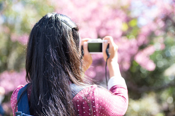 Back view of woman taking photo of cherry blossom
