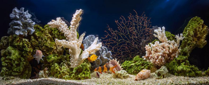 Freshwater aquarium in pseudo-sea style. Aquascape and aquadesign.