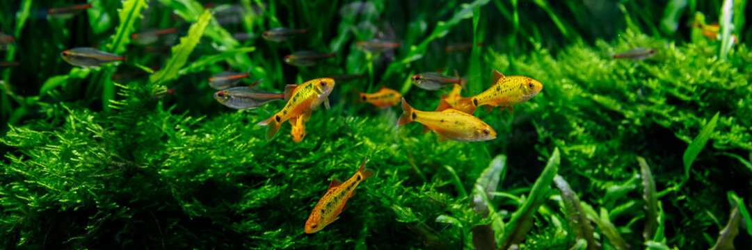 small fish in aquarium on a green background