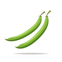 Green beans vector isolated illustration