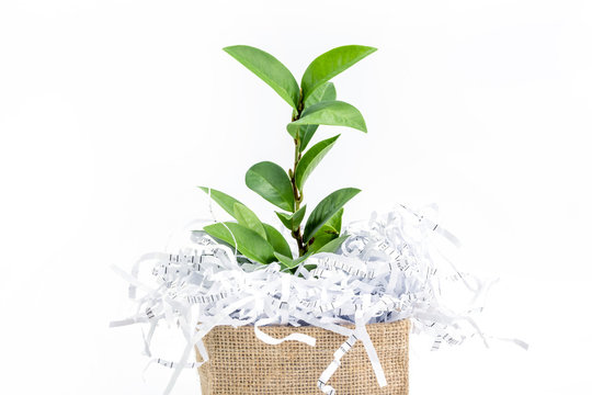 shredded paper waste with green leaf branch in burlap bag box on white background , eco friendly paperless concept