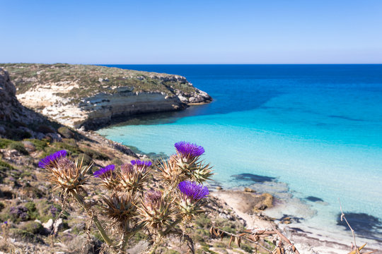 """Lampedusa Island Sicily - Rabbit Beach and Rabbit Island  Lampedusa """"Spiaggia dei Conigli"""" with turquoise water and white sand at paradise beach."""