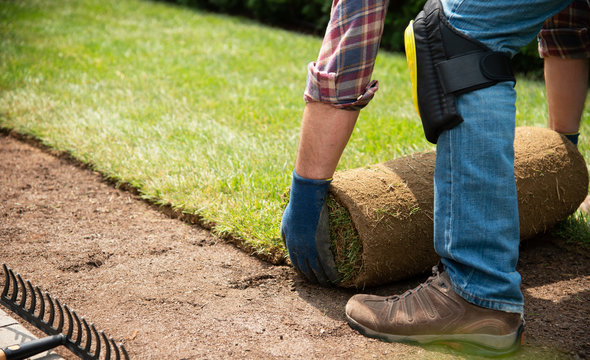 Installing turf rolls in the garden