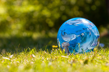 Blue ball with dolphins lies on the bright green grass with yellow grass. Family photo. The background is blurred. Selective focus. Wall mural