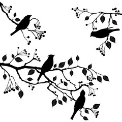 Birds on the branch - set of vector elements