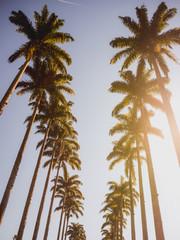 Caminho entre as palmeiras