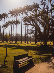 Palmeiras tropicais
