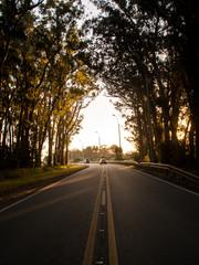Túnel de árvores