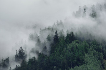 View of foggy mountains. Trees in morning fog